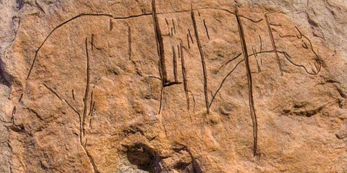 Graffito di equide nella grotta del Caviglione - Balzi Rossi